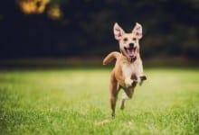 תגובתו המאושרת של כלב שהיה מועמד להמתה ברגע שמגלה שמאמצים אותו