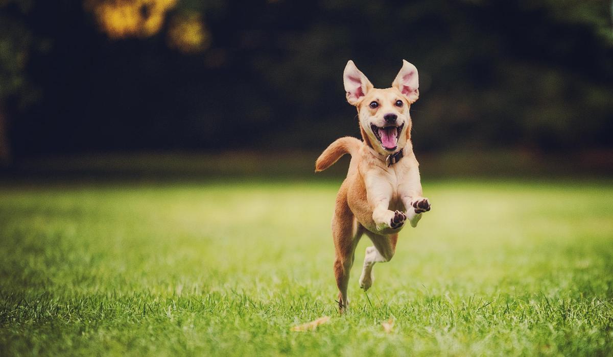 Photo of תגובתו המאושרת של כלב שהיה מועמד להמתה ברגע שמגלה שמאמצים אותו