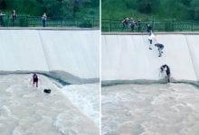 תראו איזו שרשרת אנושית נבנתה על מנת להציל את הכלב מהנהר!