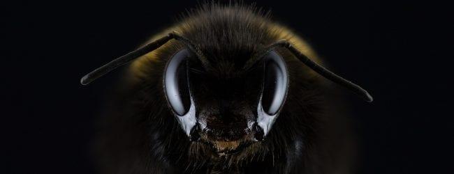 האיחוד האירופי בצעד חסר תקדים להצלת הדבורים בעולם