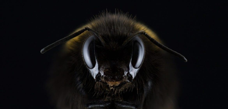 Photo of האיחוד האירופי בצעד חסר תקדים להצלת הדבורים בעולם