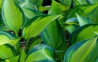 """שיחה מעניינת עם אליוט כוואן, מחבר הספר """"צמח, נשמה, רפואה"""""""