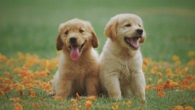 Photo of אושר הוא המטבע הקובע בחיים – טל בן-שחר