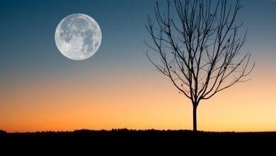 Photo of בדיוק כפי שלירח אין אור משלו, הוא רק מחזיר את אור השמש, כך גם העבר והעתיד אינם אלא החזרה חיוורת של האור, העוצמה והמציאותיות של ההווה הנצחי – אקהרט טולה