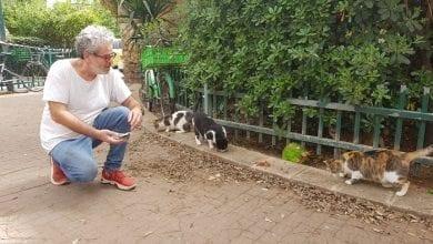 Photo of גם בקורונה יש מי שדואג לחתולי הרחוב!