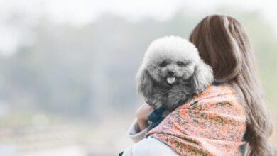 Photo of גברת עם כלבלב